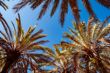 Palm tree against the background of summer sky