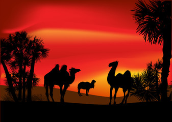 camels and palm trees at red sunset