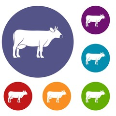 Cow icons set in flat circle red, blue and green color for web