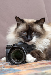 cat with camera