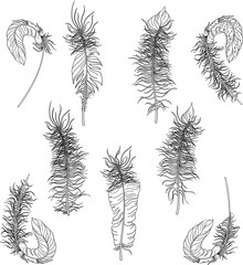 Black carnival feathers sketches isolated on white.