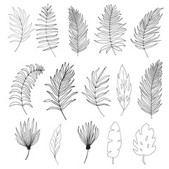 Set of palm,  jungle , tropical  leaves silhouettes isolated on white background.