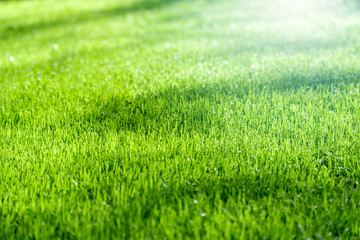 Green grass with sunlight