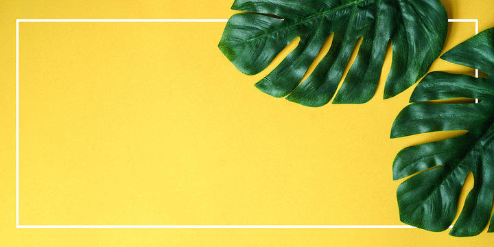 Palm Leaves Yellow Background Frame Photos Royalty Free Images Graphics Vectors Videos Adobe Stock 1300 x 1337 jpeg 129 кб. palm leaves yellow background frame
