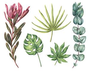 Monstera, aralia, fan palm, protea and eucalyptus