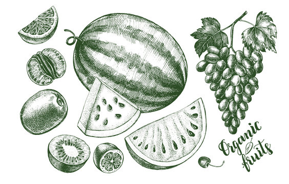 Ink hand drawn set of fruits - watermelon, grapes, kiwi fruit, tangerine. harvest elements collection with brush calligraphy style lettering. Vector illustration.