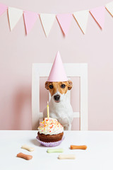 Cute dog with a party hat celebrating her birthday