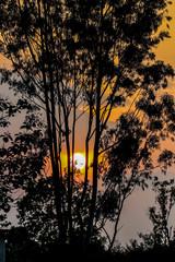 beautiful tree silhouette