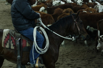 local farmers riding their quaterhorses, competing at a cutting horse, futurity event in rural new south wales, Australia