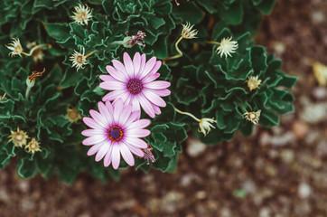 nature poster. purple flowers
