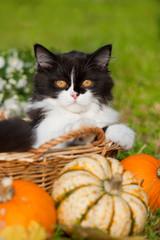 Schwarzweißes Kätzchen in einem Körbchen mit Herbstdekoration