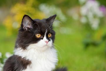 Schwarzweißes Kätzchen sitzt im Garten