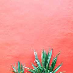 Plants on pink concept. Aloe on pink background wall.  Minimal art
