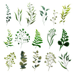 Collection of greenery leaf plant forest herbs tropical eucalyptus leaves