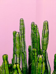 Plants on pink concept.  Cactus.  Minimal art