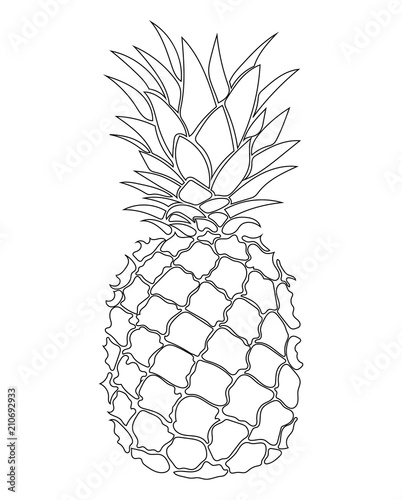 """Illustration of pineapple. Black and white print of ..."