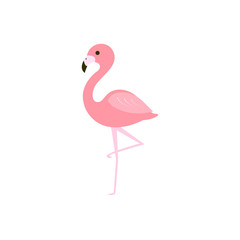 Pink flamingo vector illustration
