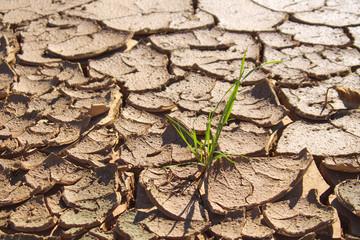 Terre aride et craquelée avec un brin d'herbe