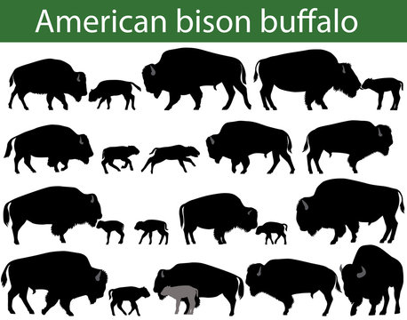 Collection of silhouettes of american bison, or buffalo