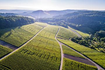 Luftaufnahme über Weinberge im Remstal in Deutschland