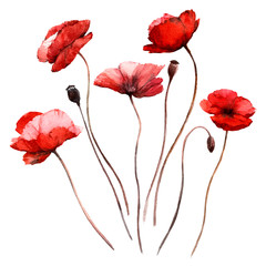 Set with isolated watercolor red poppies.