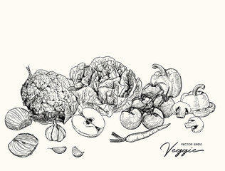 Set of Veggetables and fruit, hand draw sketch vector.