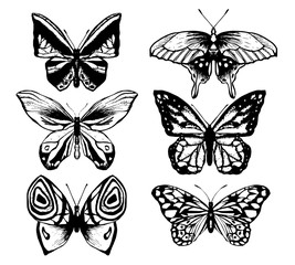Collection of butterfly or wild moths insects.