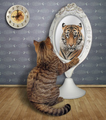 The cat sits near the mirror and looks at his unusual reflection in the room.