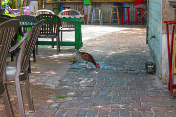 Chicken drinks water on paving stones dripping from facuet on wall near funky painted and plastic chairs and tables with unrecognizable people standing and sitting at outside bar nearby in Key West