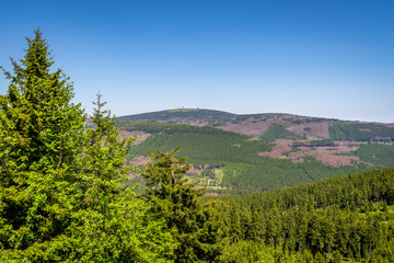 Borkenkäferbefall im Nationalpark Harz