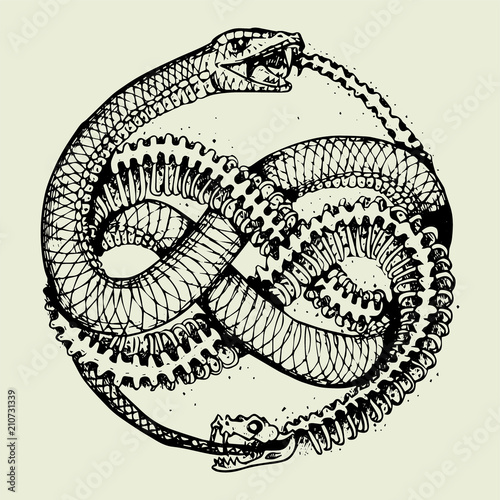 Ouroboros Tattoo Stock Image And Royalty Free Vector Files