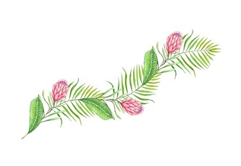drawing of a watercolor of tropical leaves and flowers on a white background
