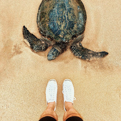 Green sea turtle and feet