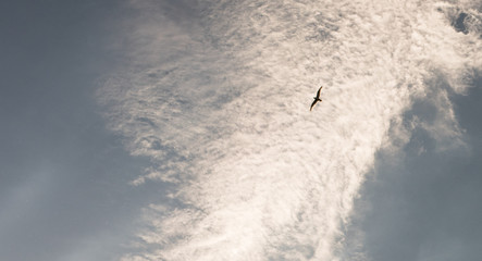 Clouds and a seagull