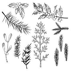Christmas plants set. Vector sketch illustration