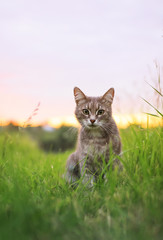 Fotorolgordijn Kat cute beautiful striped kitten fun and rushing through the green summer meadow
