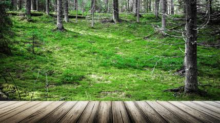 Ecology summer beautiful background