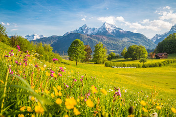 Spoed Fotobehang Honing Idyllic mountain scenery in the Alps with blooming meadows in springtime
