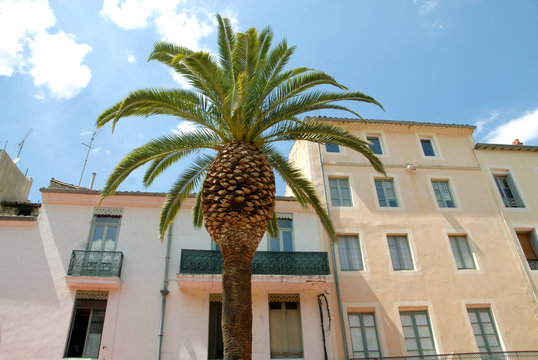 Place du marché et palmier, ville de Nîmes, département du Gard, France