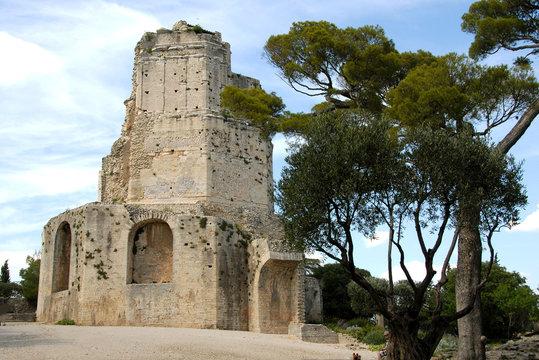 Tour Magne et pins parasols, ville de Nîmes, département du Gard, France