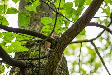 Foto auf AluDibond Straus squirrel animal wildlife portrait eat nut on green summer natural forest environment