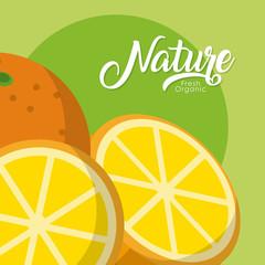 Oranges nature fruit