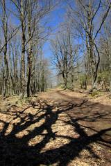 Fototapete - Shadows In The Woods Of Nebrodi Park, Sicily