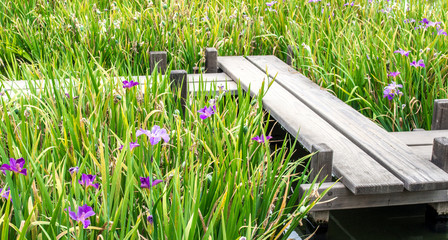 weathered wooden zigzag bridge among iris plants in a Japanese garden