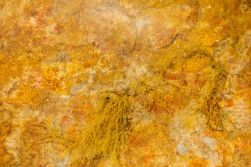 Riverbed of oranged cloured limestone background 3