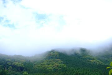 日本 雨上がりの山
