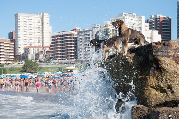 Dogs vs waves
