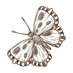 Butterfly insect monochrome sketch outline white vector illustration