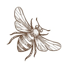 Bumblebee insect monochrome sketch outline white vector illustration