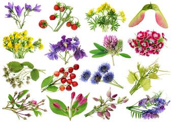 June  summer European wild  plants   and flowers set. Isolated on white studio macro shots.